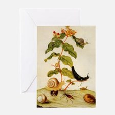 Hypericum by Merian Greeting Card