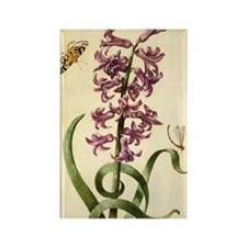 Hyacinth by Merian Rectangle Magnet