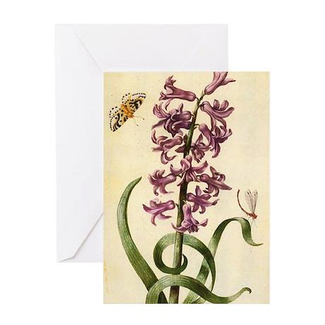 Hyacinth by Merian Greeting Card