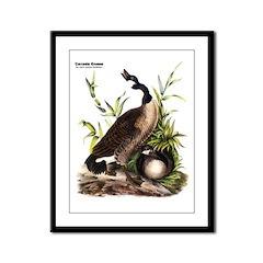 Audubon Canada Goose Bird Framed Panel Print