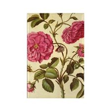 Dutch Rose by Merian Rectangle Magnet