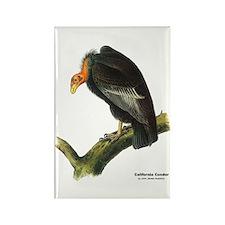 Audubon California Condor Bird Rectangle Magnet