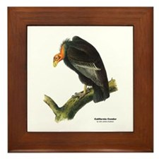 Audubon California Condor Bird Framed Tile