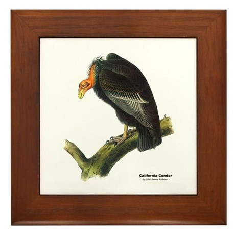 Audubon California Condor Bird Framed Tile