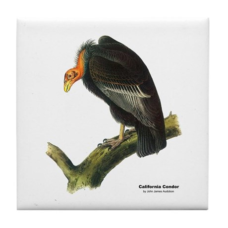 Audubon California Condor Bird Tile Coaster