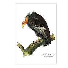 Audubon California Condor Bird Postcards (Package