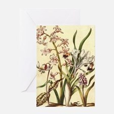 Dog Tooth Violet Greeting Card