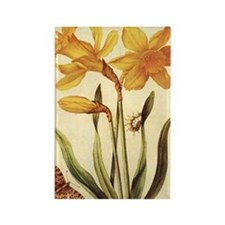 Daffodil by Merian Rectangle Magnet
