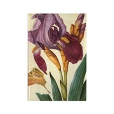 Bearded Iris by Merian Rectangle Magnet
