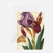 Bearded Iris by Merian Greeting Card