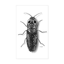 Eyed-Click Beetle Rectangle Stickers