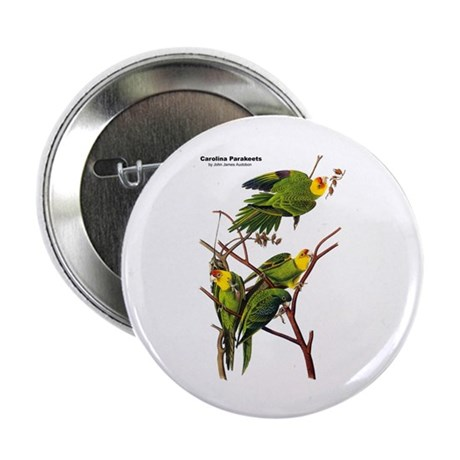 "Audubon Carolina Parakeet Birds 2.25"" Button (10 p"