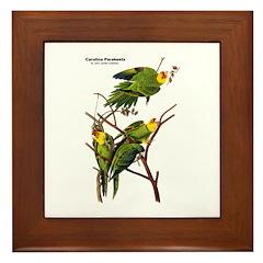 Audubon Carolina Parakeet Birds Framed Tile