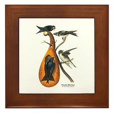 Audubon Purple Martins Bird Framed Tile