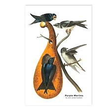 Audubon Purple Martins Bird Postcards (Package of