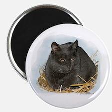 Jonesy the Chartreaux Cat Magnet