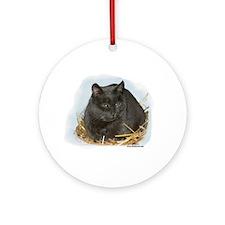 Jonesy the Chartreaux Cat Ornament (Round)