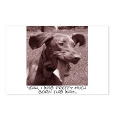 Crazy dog (vizsla) Postcards (Package of 8)