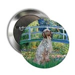 Bridge / English Setter 2.25