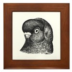 Ancient Shortface Pigeon Framed Tile