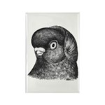 Ancient Shortface Pigeon Rectangle Magnet (10 pack