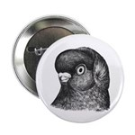 "Ancient Shortface Pigeon 2.25"" Button (10 pac"