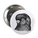 "Ancient Shortface Pigeon 2.25"" Button"