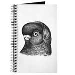 Ancient Shortface Pigeon Journal