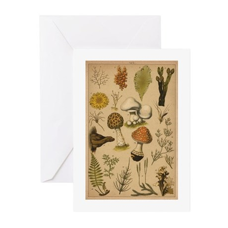 Antique Mushrooms Greeting Cards (Pk of 20)