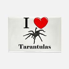 I Love Tarantulas Rectangle Magnet