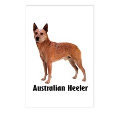 Australian Heeler Cattle Dog Postcards (Package of