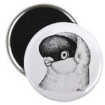 "Helmet Shortface Pigeon 2.25"" Magnet (10 pack"