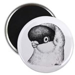 "Helmet Shortface Pigeon 2.25"" Magnet (100 pac"