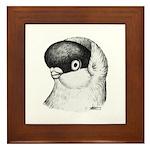 Helmet Shortface Pigeon Framed Tile