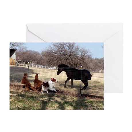 Show Down Greeting Cards (Pk of 10)