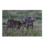 Flirting whitetails Postcards (Package of 8)