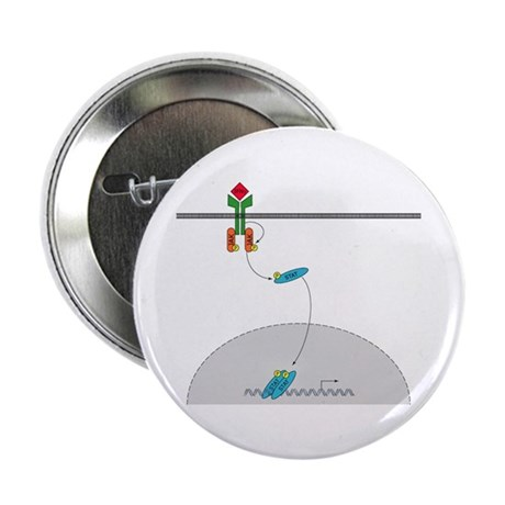 "Jak-Stat signaling pathway 2.25"" Button (10 pack)"