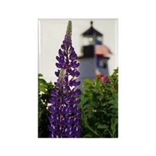Pemaquid Lupin Rectangle Magnet
