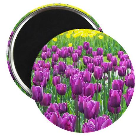 Spring Easter Tulip Blossms Magnet