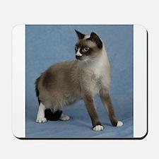 Cute Snowshoe cats Mousepad