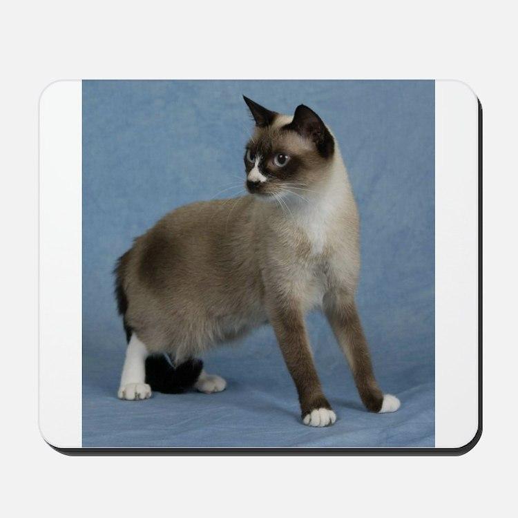 Cute Snowshoe cat breed Mousepad
