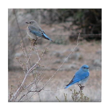 bluebirds on fence Tile Coaster