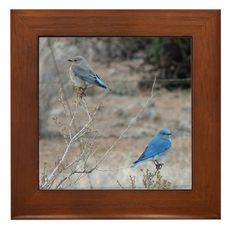 bluebirds on fence Framed Tile