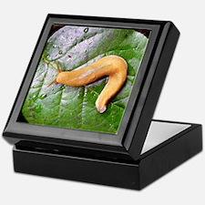 Banana Slug on Leaf Keepsake Box