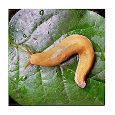 Banana Slug on Leaf Tile Coaster