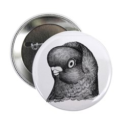 Hollander Shortface Pigeon 2.25