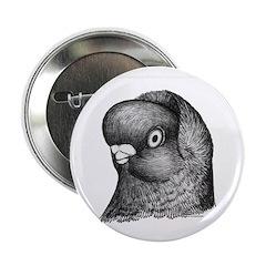 Hollander Shortface Pigeon 2.25