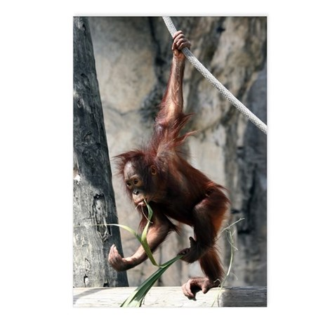 Orangutan diet Postcards (Package of 8)