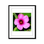 Glorious Violet Wood Sorrel Framed Panel Print