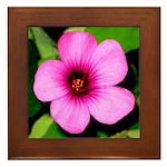 Glorious Violet Wood Sorrel Framed Tile